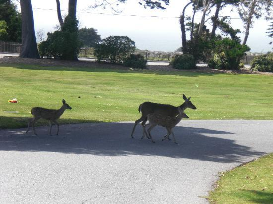Sea Breeze Inn & Cottages: Some local residents