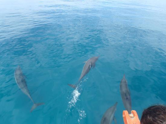 Natalei Eco Lodge : dolphins
