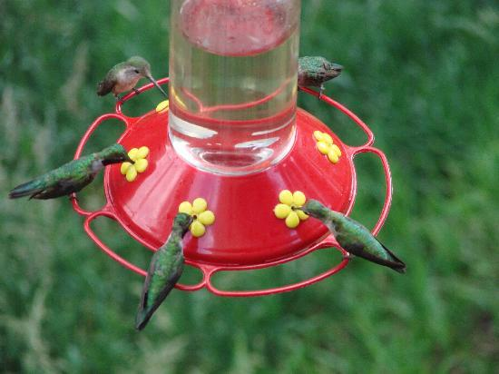 Kokopelli Inn: Just a few of the hummers