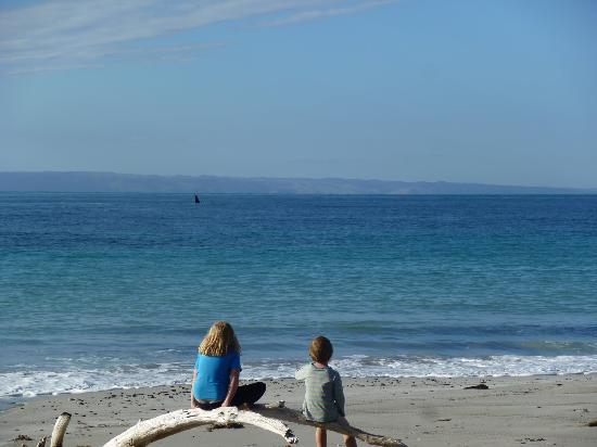 Antechamber Bay Retreats: Whales in the bay
