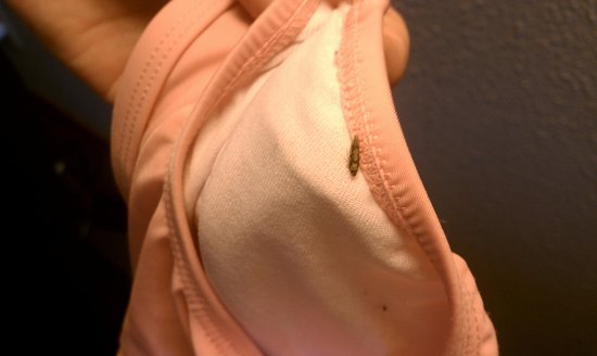 Days Inn & Suites Des Moines Airport: Bugs from room in neices swim trunks next morning in bath.