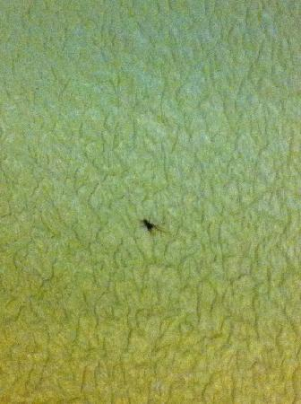 Clarion Hotel Lexington Conference Center: Dead bug on the wall - it was pretty crunchy - it had been there a while!