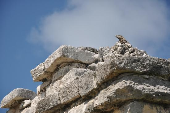 Weary Traveler Hostel : Mayen Ruins