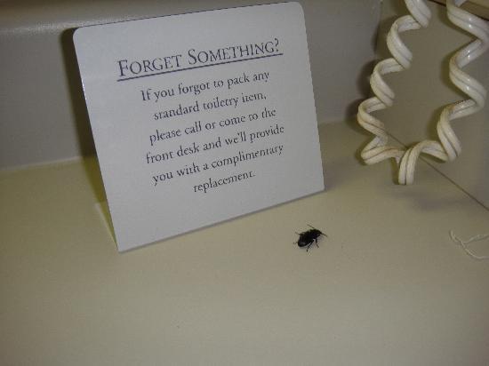 แมนคาโต, มินนิโซตา: bug