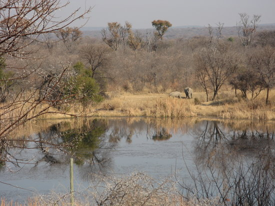 Tilodi Wilderness : view over watering hole from lodge