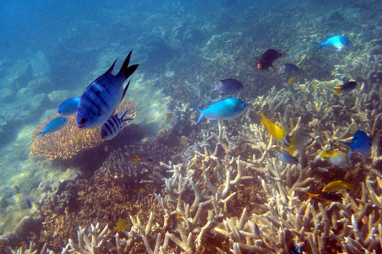 Illusions Whitsundays: Colourful fish galore.