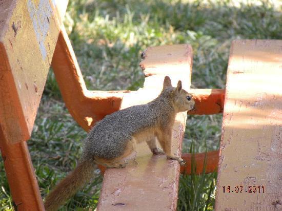 Kustur Club Holiday Village: Les écureuils dans le parc, la joie des enfants.
