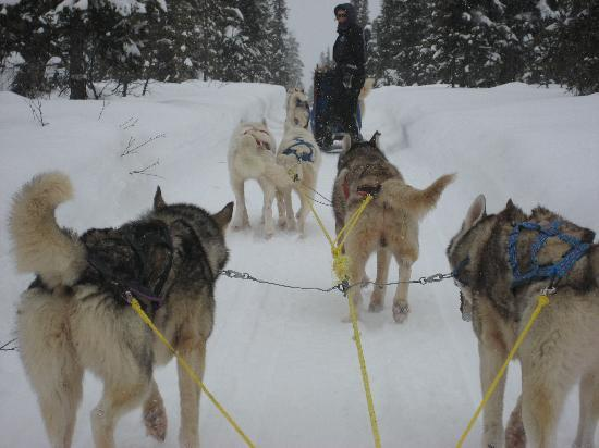 Hotel Arctic Eden: Dog sled care of Arctic Direct