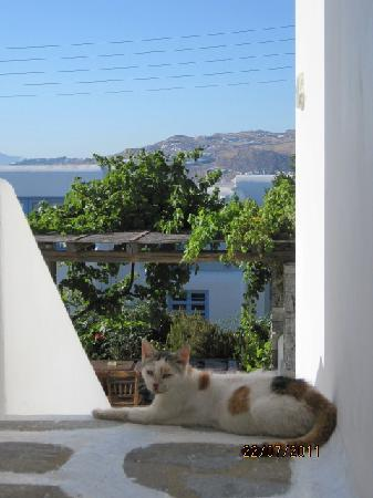 ‪‪Andriani's Guest House‬: good view with a cat‬