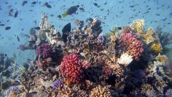 Gorgonia Beach Resort: amas de poissons