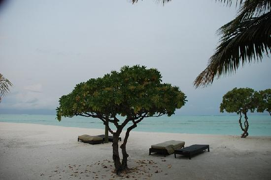 COMO Cocoa Island: Beach