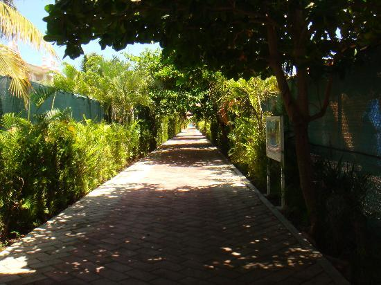 Hotel Riu Lupita: The walkway to the beach club
