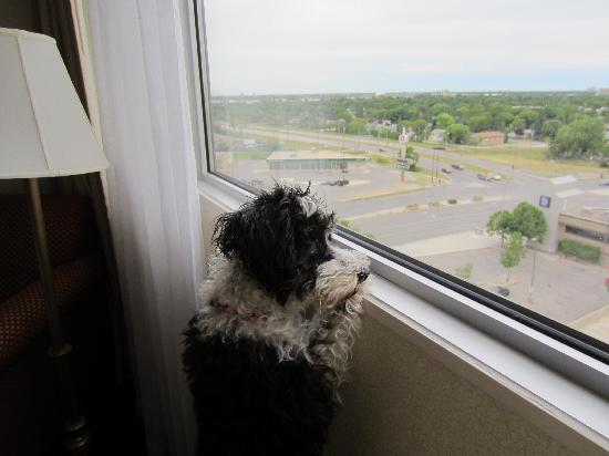 Holiday Inn Winnipeg South: Elly enjoying the view.