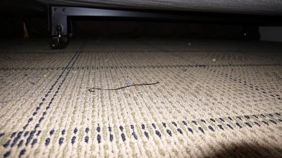 Parker Guest House : Sous le lit 2