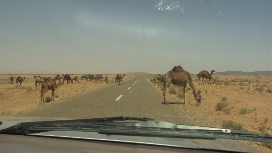 Ligne d'Aventure - Day Tours: animals on the road