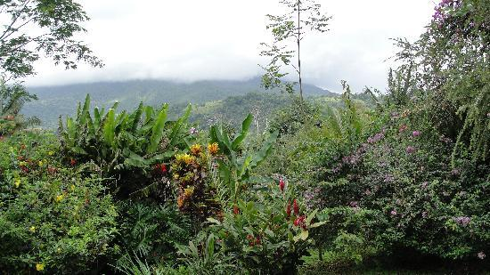 Hotel Mountain Paradise: Lush grounds, view of Arenal (when not foggy)