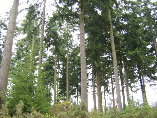 Center Parcs Longleat Forest: more trees !