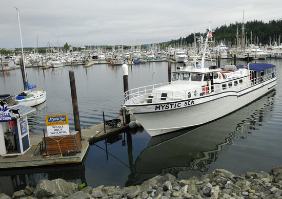 Mystic Sea Charters: The boat at the dock