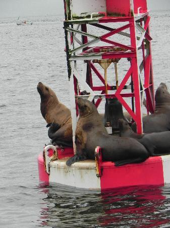 Scandia House: Sea lions on buoy at entrance to Petersburg harbor
