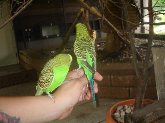 Blank Park Zoo : Budgie bog-in feeding aviary.