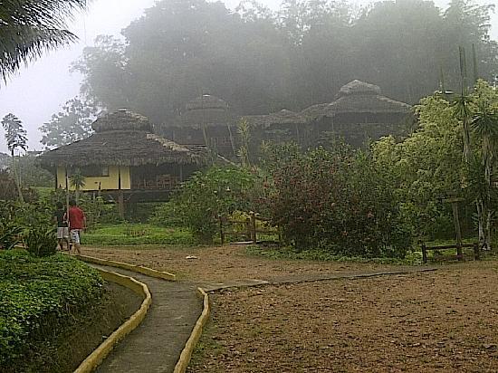 Arasha Tropical Rainforest Resort & Spa: Rainforest view