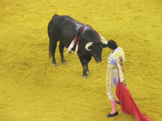 Campo Pequeno: Not for everyone for obvious reasons.