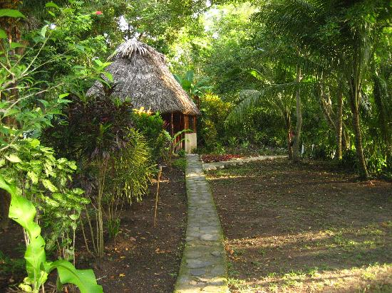 Cohune Palms River Cabanas: path to the river