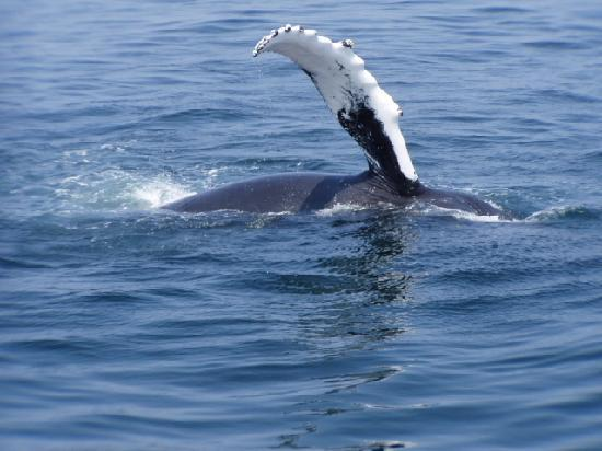 Howards End Guest House : Great Whale Watching Location