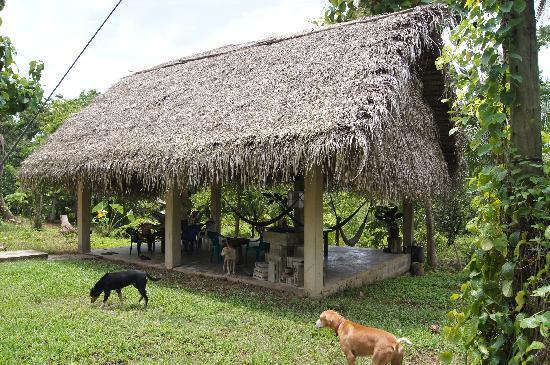 Back-a-Bush Guesthouse: the shady palapa