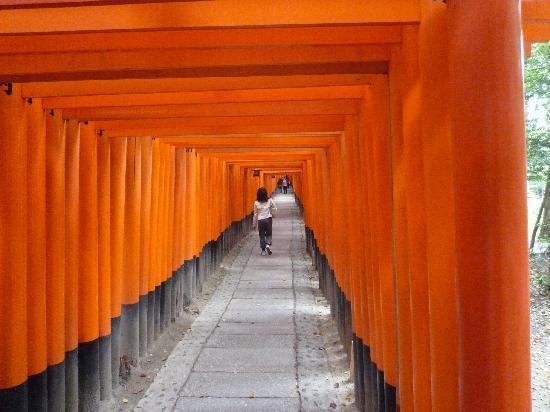 ศาลเจ้าฟูชิมิ อินาริ: 鳥居のトンネル