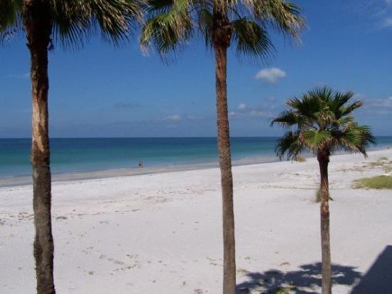 The Beachcomber 사진
