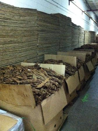Tabacalera de Garcia Factory Tour: Tobacco from all over the world...