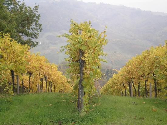 Enoteca la Zaira: nearby vines to Bazzano