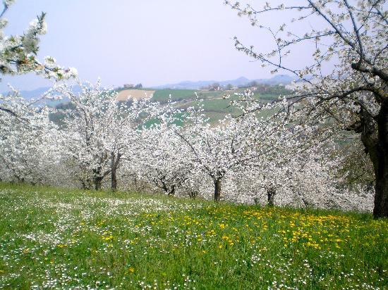Enoteca la Zaira: a zone super famous for cherries