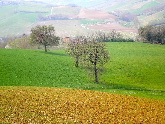 Enoteca la Zaira: typical colours around Bazzano
