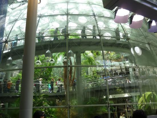 Inside The Rainfrest Picture Of California Academy Of