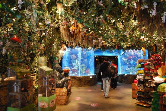 Disneyland California Rainforest Cafe