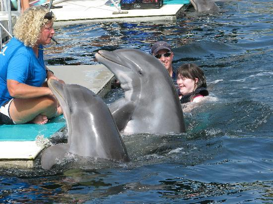 Dolphins Plus - Key Largo: In The water!