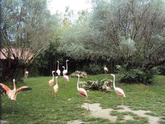 Cartigliano, Italia: fenicoteri rosa