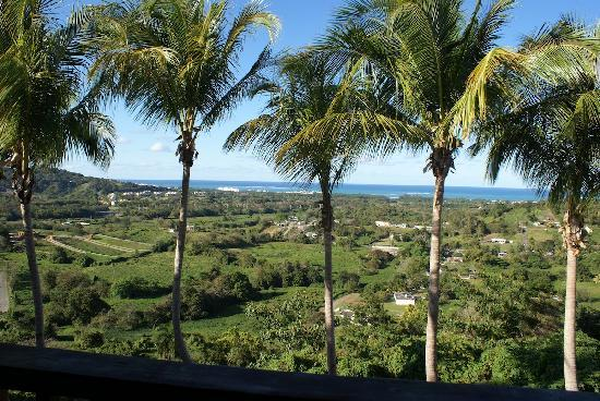 Rainforest Ocean View Inn : view from room
