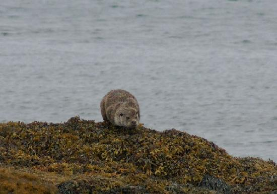 Western Isles Wildlife Tours: Otter