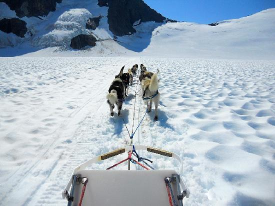 Coastal Helicopters: Awesome dogs!