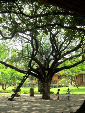 Tigbauan, Philippines : The kids really enjoyed playing in this tree house.