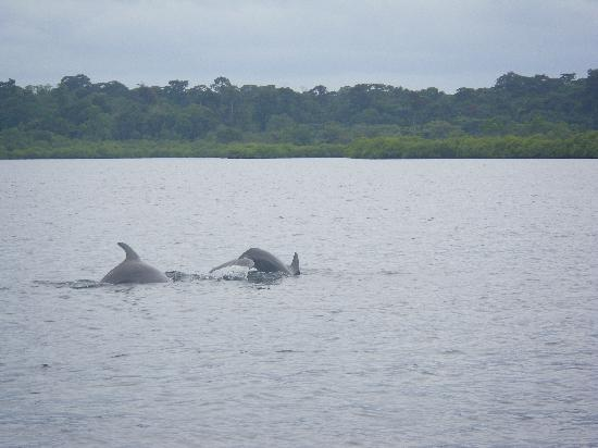 Eclypse de Mar: Dolphin watching in Dolphin Bay
