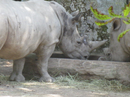 Lille Zoo: The Big Boys