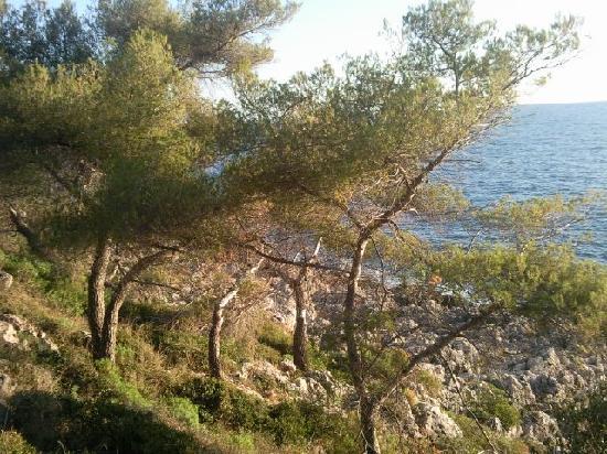 Promenade Le Corbusier: les pins