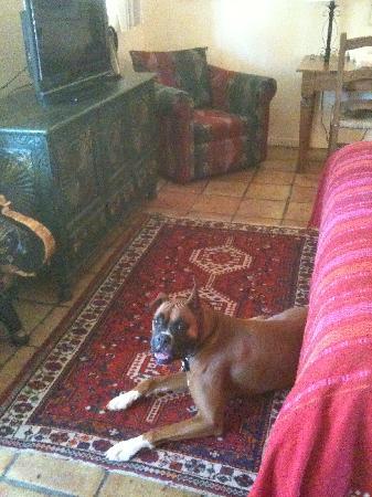 Happy camper pup at Casa Cody