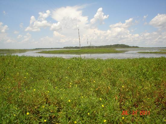 Aquatic Adventures Airboat Tours: Powerlines across the lake.  Who would have guessed that?