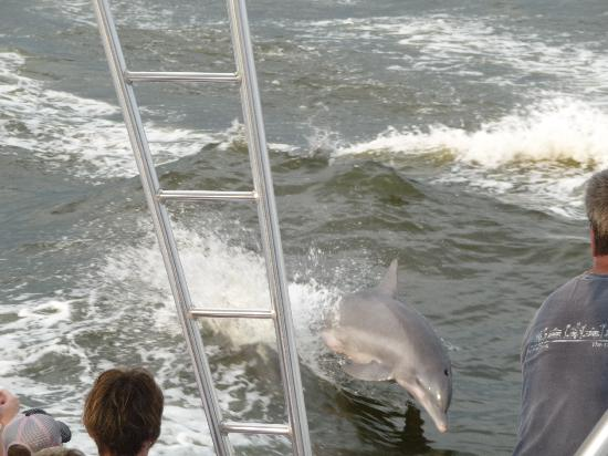 Dolphin Cruise aboard the Cold Mil Fleet: Dolphin Cruise