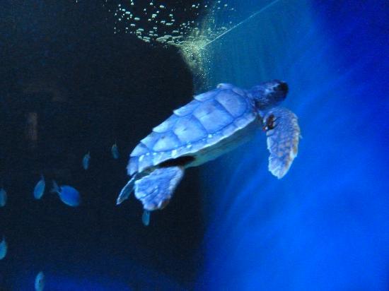 Squalo foto di acquario di cattolica cattolica for Acquario di tartarughe